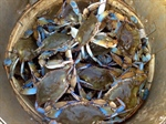 Crabs, supersized by carbon pollution, may upset Chesapeake's balance