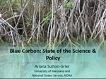 Blue Carbon: The Climate Mitigation Opportunity You've Never Heard Of