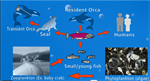 New Video on Ocean Acidification: Salmon and the Puget Sound
