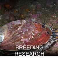 Breeding Research