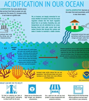 ACIDIFICATION IN OUR OCEAN