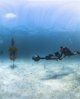 Florida Keys and Caribbean Acidification Research